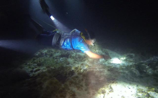 Para aventureros se encuentra la opción Snorkel Nocturno
