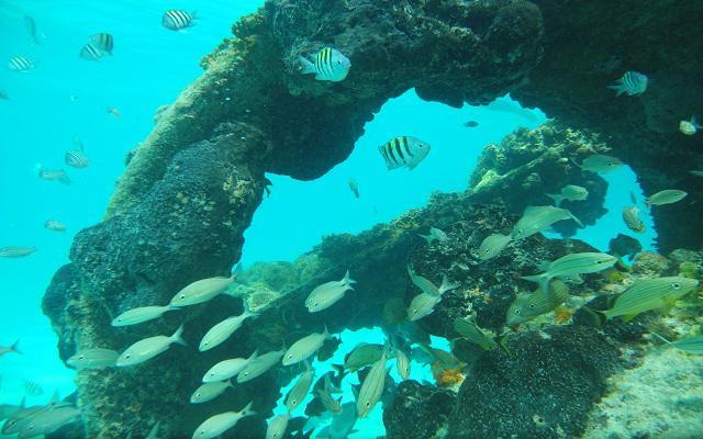 Snorkel en Cancún en Cancún