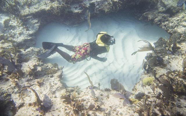 Si eliges Snorkel en aguas profundas podrás observar bancos de arena