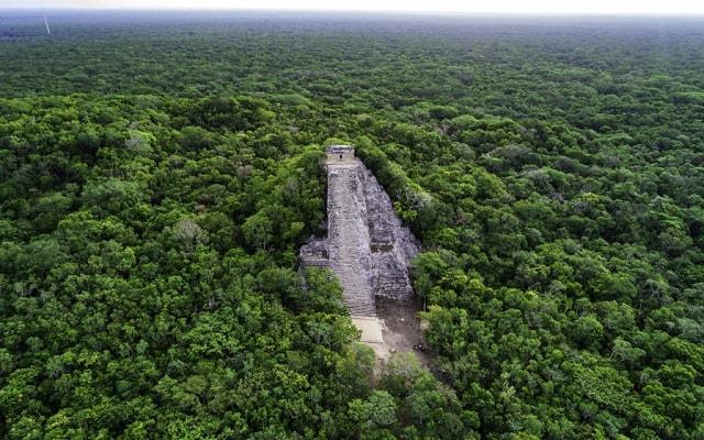 Tour a Cobá y Comunidad Maya con Actividades Extremas, explora la flora y la fauna del lugar