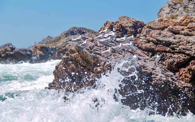 Tour a Isla Marietas y Playa Escondida, admira las aves marinas de la región