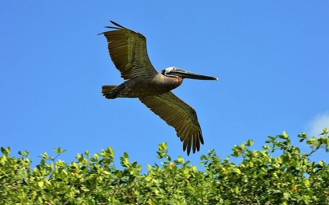 Tour a Sian Ka'an, con aves maravillosas