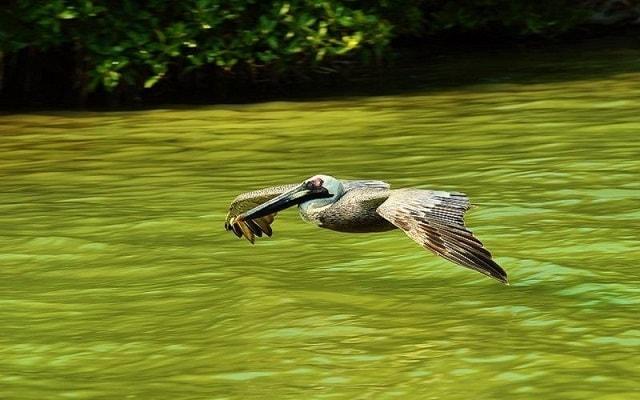 Tour a Sian Ka'an, verás aves exóticas