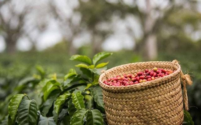 Tour a Xalapa, Coatepec y Xico Veracruz, conoce el proceso de elaboración del café