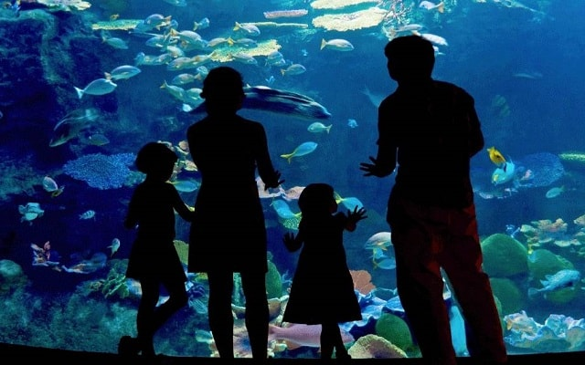 Tour al Acuario de Veracruz, Museo Naval y San Juan de Ulúa, visita el acuario más visitado del mundo