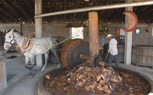 Tour al Árbol del Tule, Hierve el Agua, Mitla y Teotitlán del Valle, conoce el proceso de elaboración del delicioso mezcal