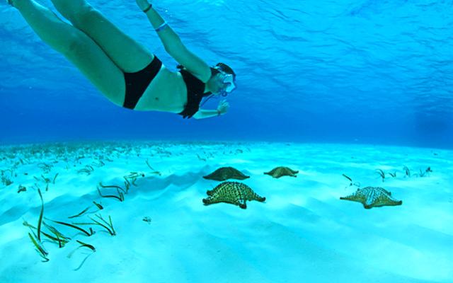 Tour al Cielo Cozumel más Snorkel, disfruta del Cielo con estrellas de mar