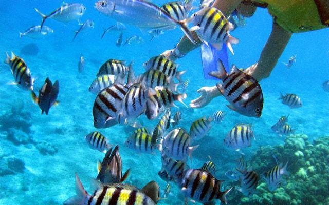 Tour al Cielo Cozumel más Snorkel, una experiencia inolvidable