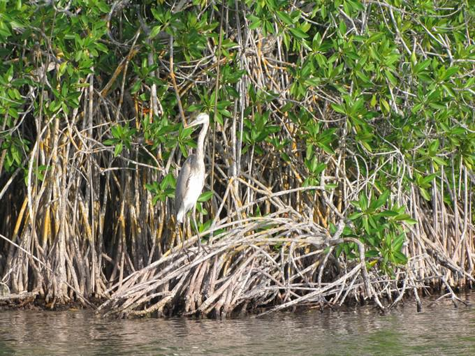 Sian Kaan una de las reservas naturales de México