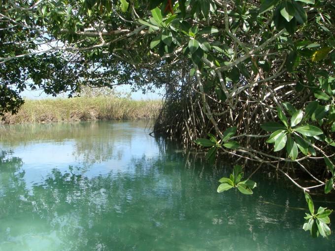 Este sitio es hábitat de diversas especies de flora y fauna