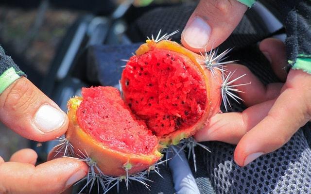 Tour en Bicicleta de Montaña por el Desierto de la Baja, conoce frutos y flora local