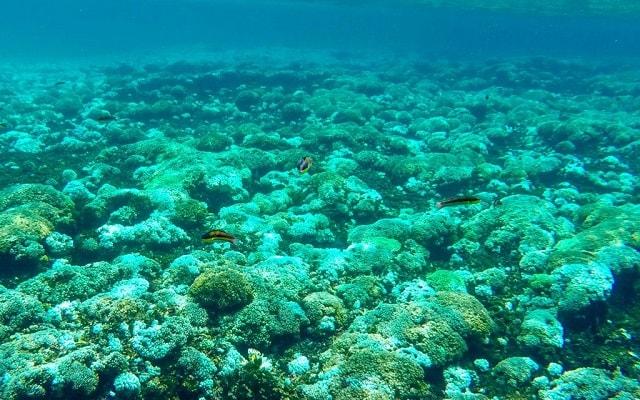 Tour por Bahías de Huatulco en Lancha, conoce la vida marina
