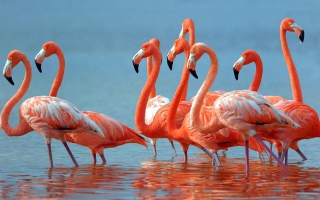 Resultado de imagen para rio lagartos flamencos