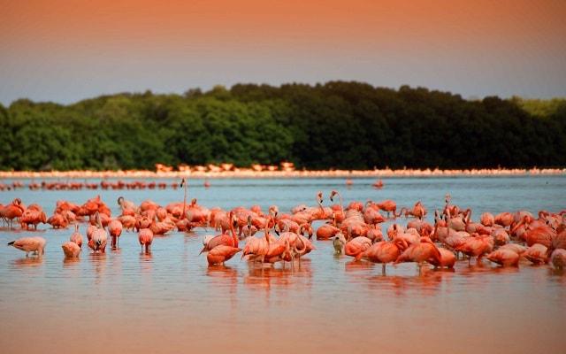 Resultado de imagen para las coloradas yucatan flamencos