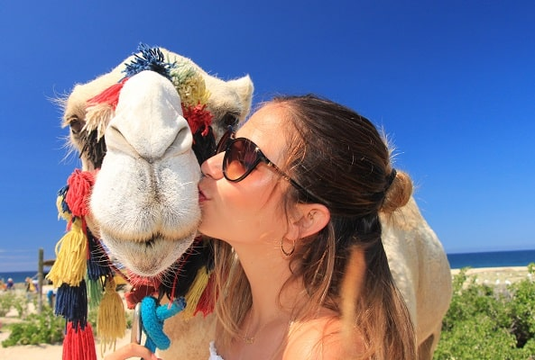 Tour Safari en Camello