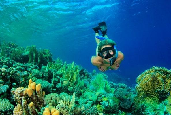 Tour Snorkel en Roca Pelícano Cabo San Lucas