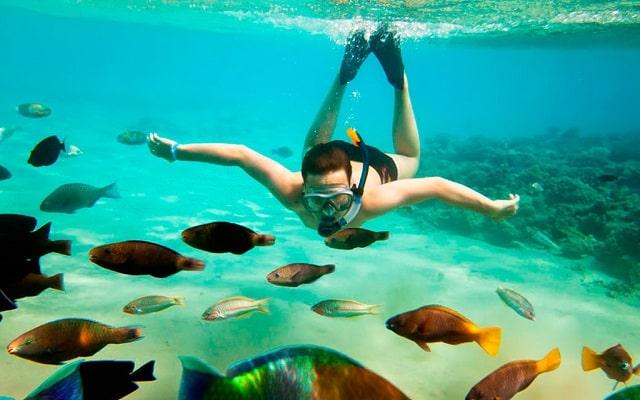 Tour Snorkel en Roca Pelícano Cabo San Lucas, admira la fauna marina