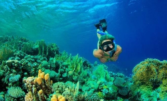 Tour Snorkel en Roca Pelícano Cabo San Lucas, una aventura inolvidable