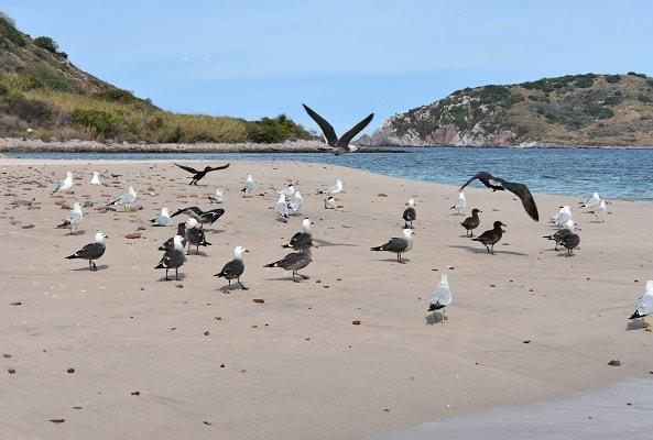 Tour Snorkel y Kayak en Isla de Pájaros