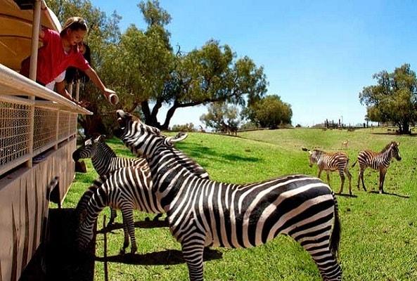 Turitour Reino Animal en Ciudad de México