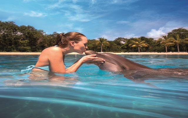 Ventura Park, Nado e interacción con delfines en Dolphinaris