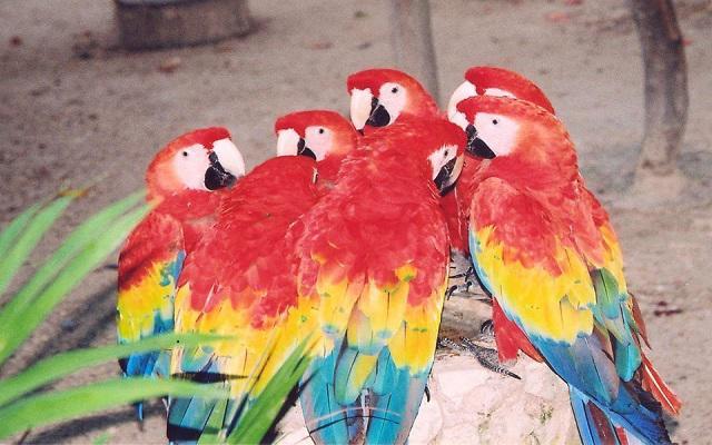 Tour a Xcaret, admira aves exóticas y convive con fauna local