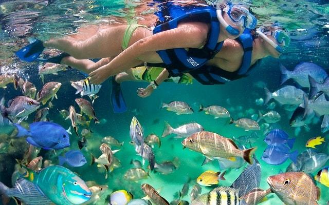 Xel Há, será de otro mundo nadar al lado de la vida marina